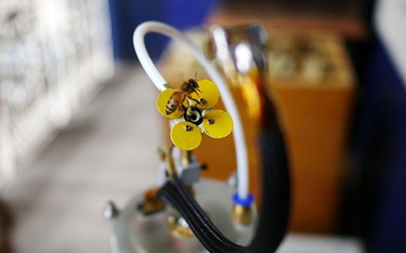 abeille et fleur robotique imprimées en 3D